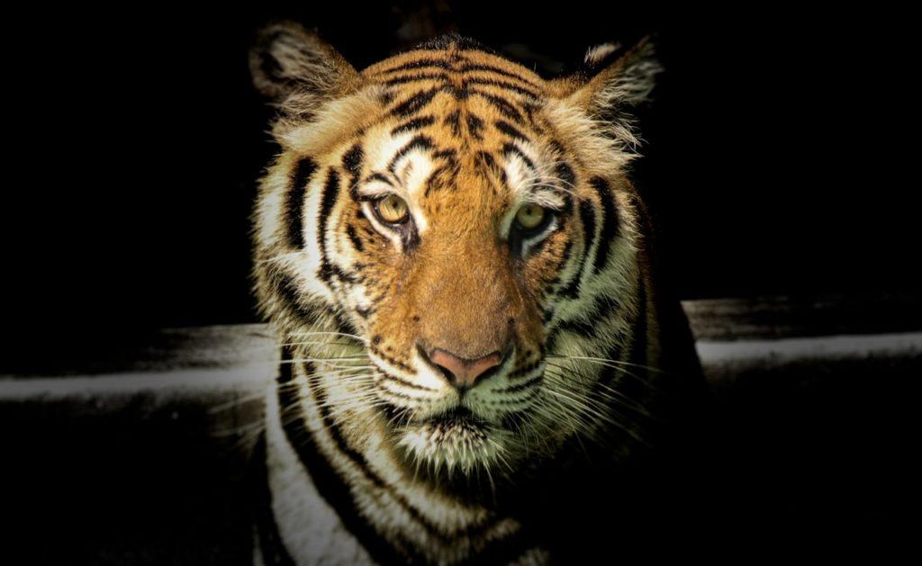 angry-animal-animal-photography-951007-pexels-branding-rebrand-beast
